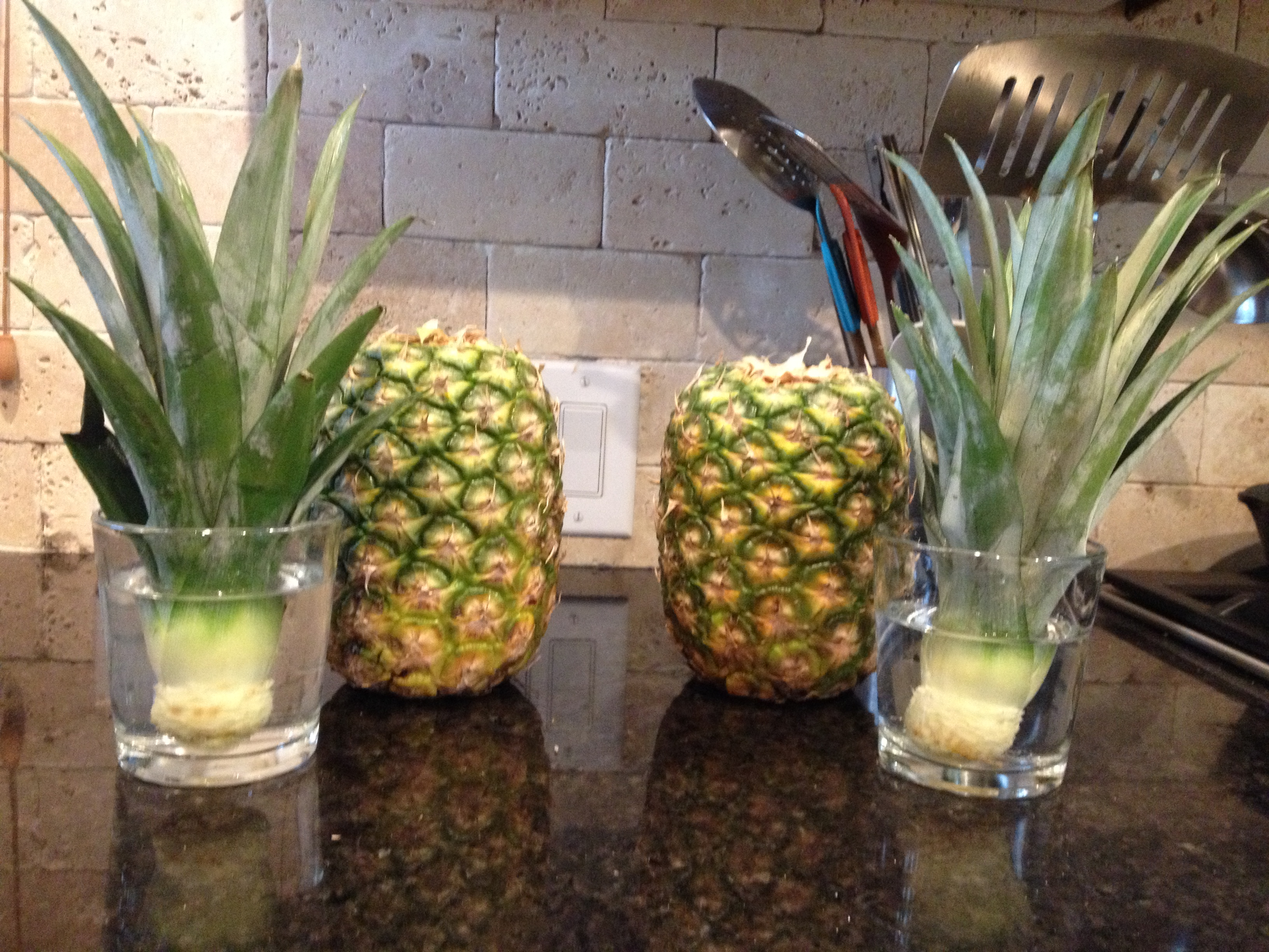 Growing pineapples the crabs 39 homestead for How do i plant a pineapple top