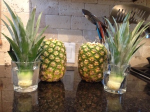 Off With Their Heads! Place your Pineapples in a glass of water for 24 hours to help stimulate the roots. Or you can plant directly into a good Organic Potting Soil.